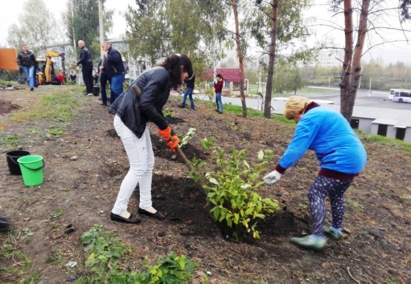 В Мысках высадили более 350 молодых деревьев и кустарников