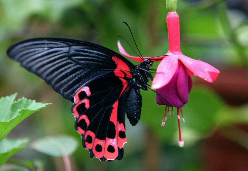 Выставка «Мир бабочек» открылась в Мысках