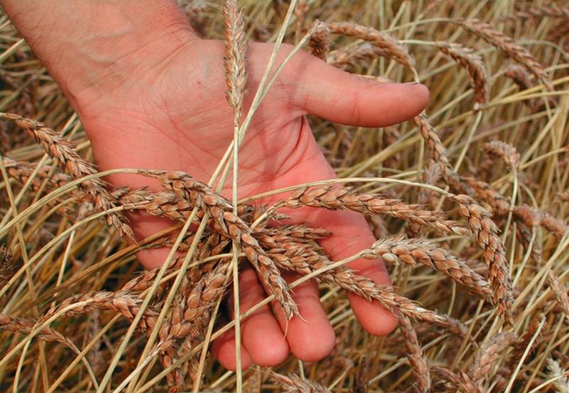 Кузбасские фермеры будут развивать растениеводство и животноводство