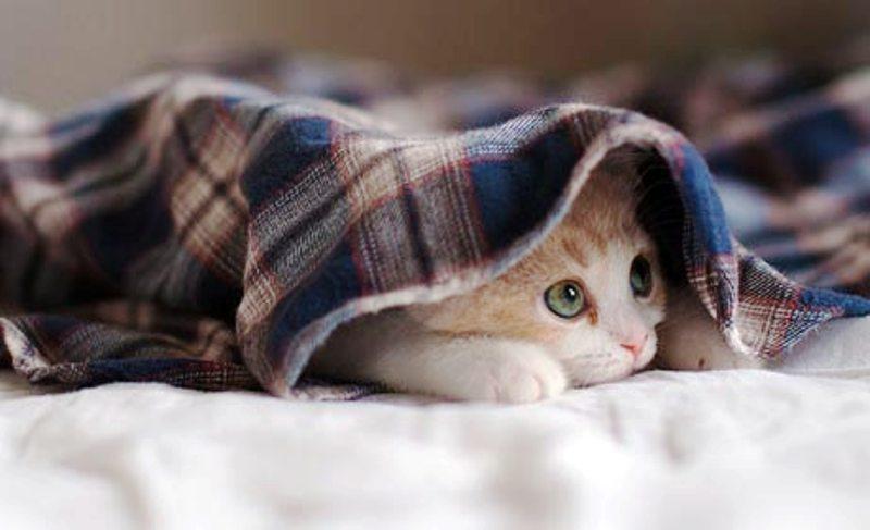 В Кузбассе поймали бешеную кошку