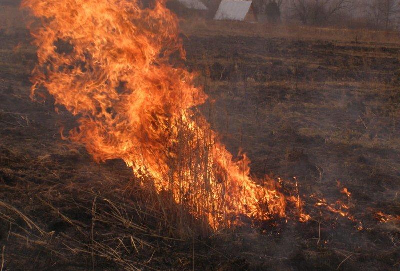 Мысковчан призывают отказаться от практики поджигать весной сухую прошлогоднюю траву
