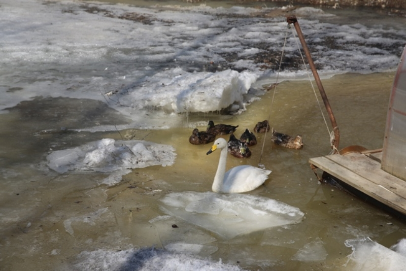 Ребятишки из Мысков посетили «Кузнецкий Алатау» в Международный День птиц