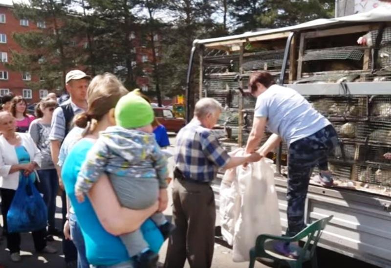 Мысковчане получат кур-несушек, в рамках социальной поддержки многодетных семей