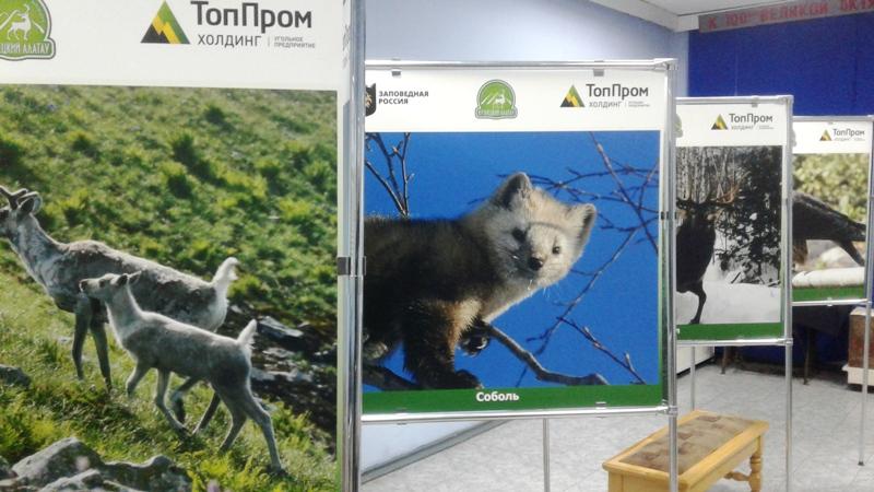 В Мысковском музее открылась выставка «Тропой «Кузнецкого Алатау»