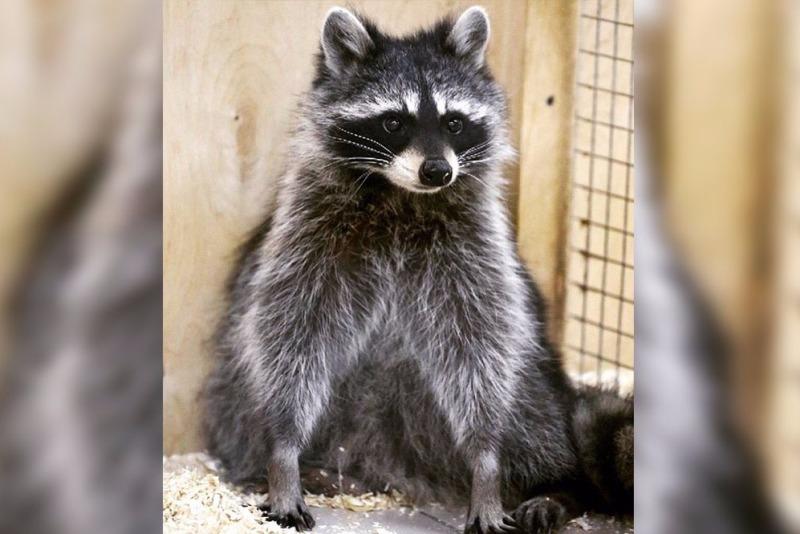 В Кемерове из контактного зоопарка ТЦ «Зимняя вишня» никто из зверей не выжил