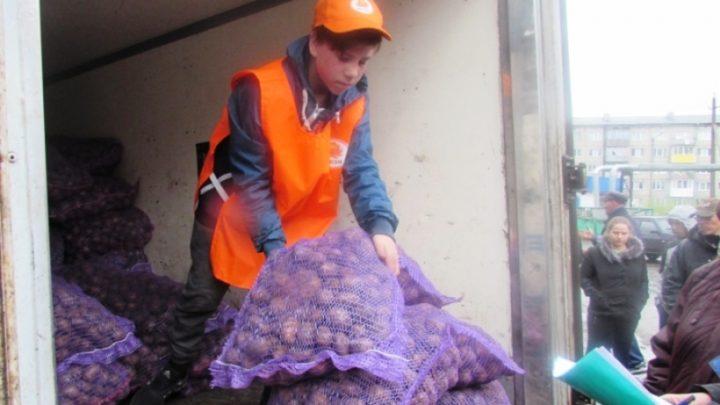 Многодетные семьи Кузбасса получат бесплатный картофель