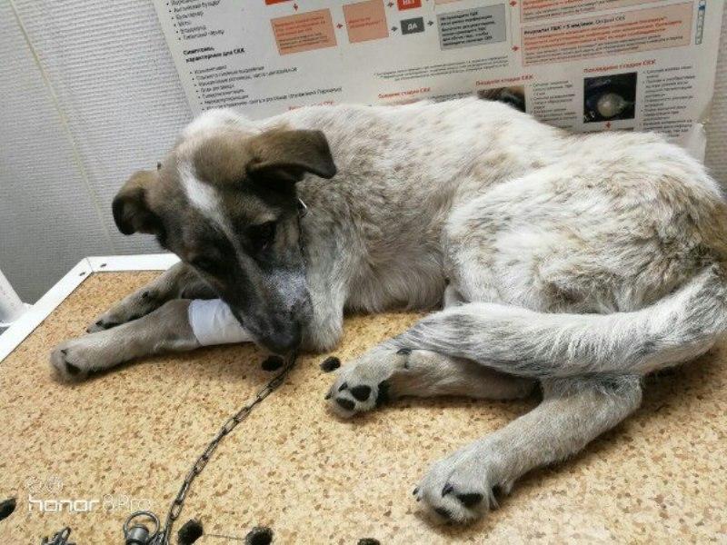 Зоозащитники недовольны отказом полиции Мысков возбуждать уголовное дело по факту убийства животных
