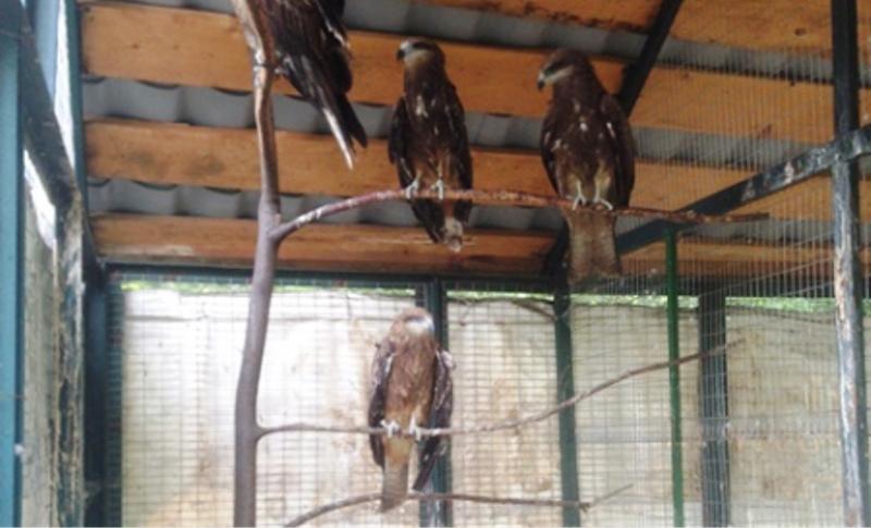 Мысковчане привезли подросшего птенца пустельги обыкновенной в заповедник «Кузнецкий Алатау»