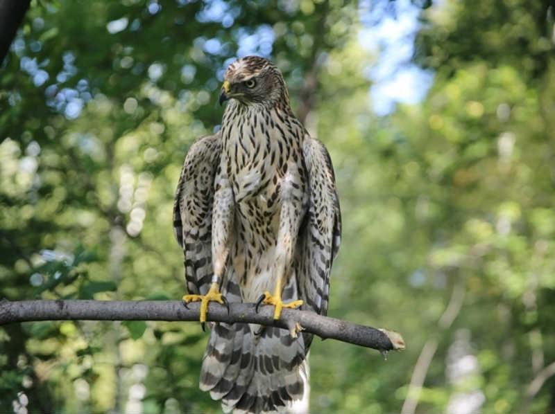 Центру реабилитации диких птиц «Крылья» в заповеднике «Кузнецкий Алатау» исполняется 3 года
