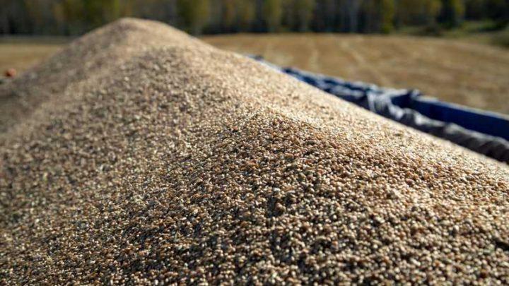 Аграрии Кузбасса переработали 1 млн тонн зерна