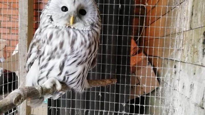 В Центре реабилитации диких птиц «Крылья» появился новый пернатый пациент