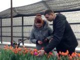 В Мысках распустились тюльпаны