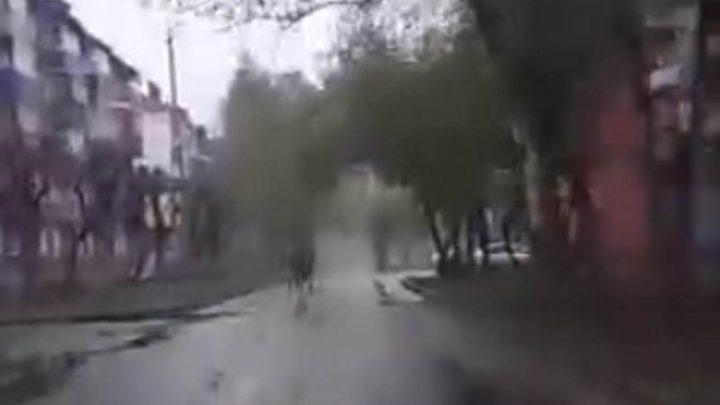 В Междуреченске по городским улицам бегал лось