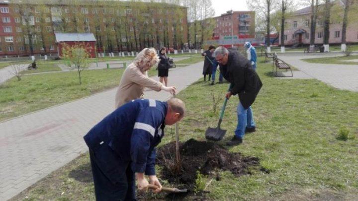 1000 деревьев и кустарников высажено в Мысках