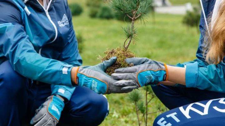 В лесах Кузбасса в 2020 году высадят почти 6,5 миллионов деревьев