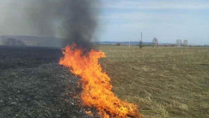 В Мысках ликвидирован пал травы у ЦОФ «Сибирь»